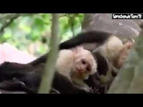 Lustiges video by