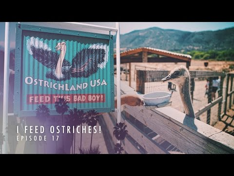I FEED OSTRICHES! | EP.17 (GSOM WEB SERIES 5)
