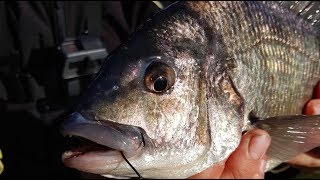 Metro Bream Fishing