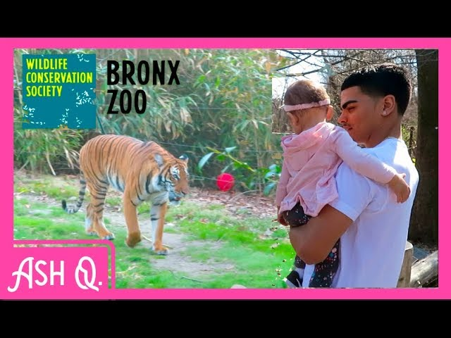 Family Day At The Zoo Bronx Zoo Nyc Video Nyc Informer