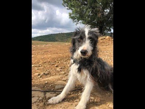 Cotin perro joven en adopción en la protectora de jaca