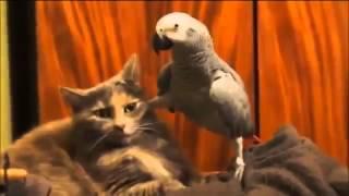 Очень наглый попугай!