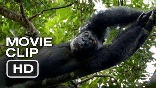 Chimpanzee Movie CLIP - Nap Time (2012) Disney Nature Movie HD