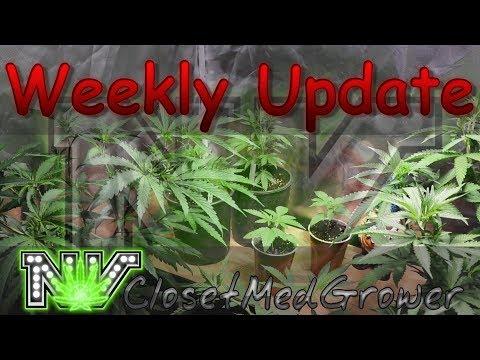 Weekly Update 7/19/2017