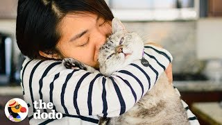 Gambar cover Meet The Most Popular Cat On Instagram  | The Dodo Airbnb Experiences