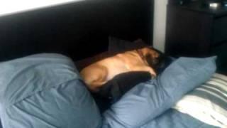 Скачать Rooney Sleeping