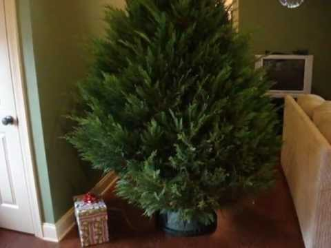 Christmas Tree Watering System.How To Make A Christmas Tree Watering Device