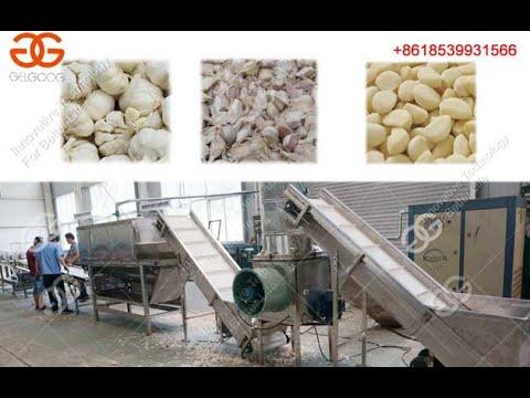 Garlic  Clove Separating And Peeling Plant Garlic Processing Equipment