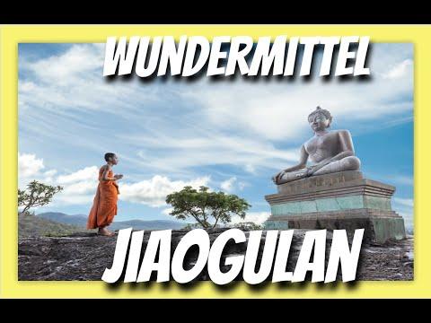 ✅Wundermittel Jiaogulan - Das (nicht ganz) verbotene Kraut der Unsterblichkeit der TCM