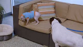 This Cat Spends His Days At A Resort For Dogs | Cat vs. Dog