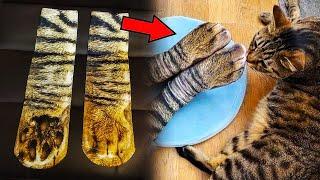 Хозяин купил носки в виде кошачьих лап Такой реакции от своего кота он не ожидал
