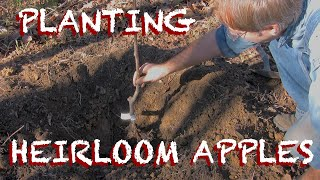 Planting Heirloom Apple Trees on the Small Farm - The Farm Hand