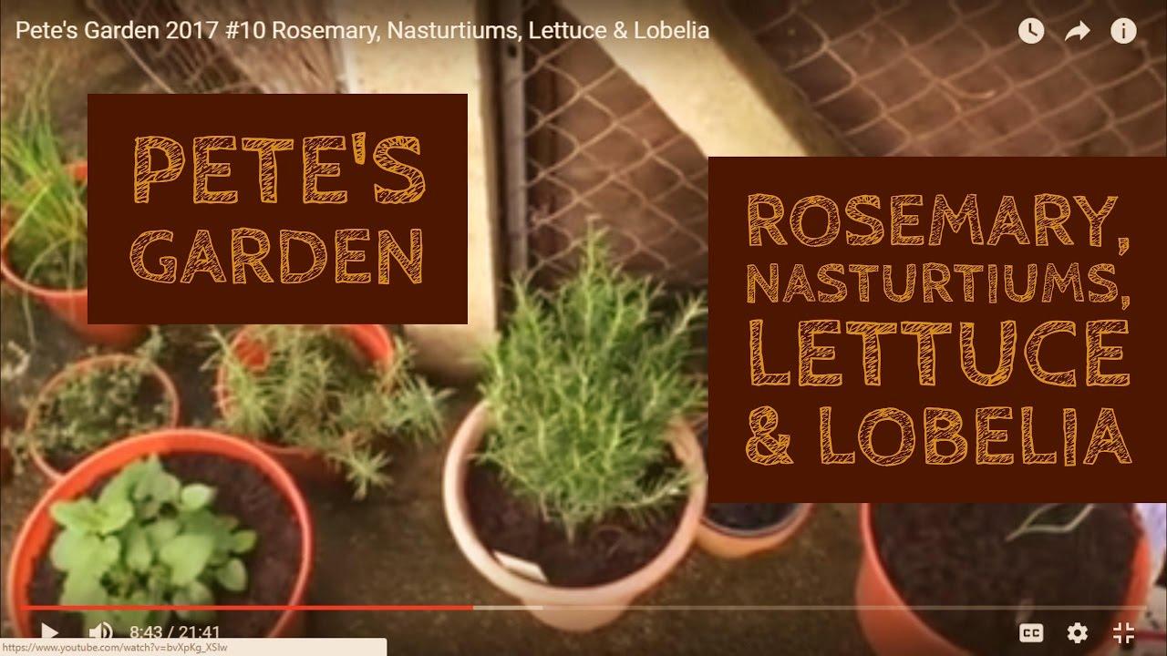pete's garden 2017 #10 rosemary, nasturtiums, lettuce & lobelia