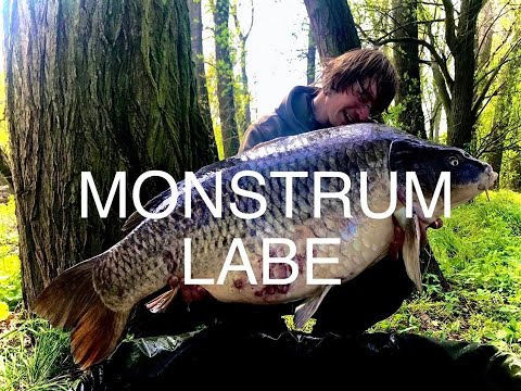 MONSTRUM LABE 26,5