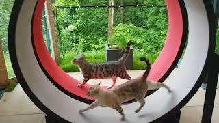 Katzenlaufrad Cat in Motion