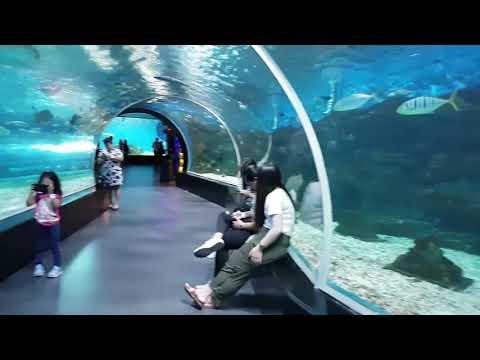 Manila Ocean Park Oceanarium And Jelly Fish