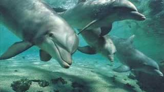 The Dreams Of The Dolphin Enigma