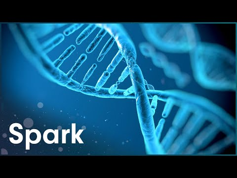 The Man Who Revolutionised Molecular Biology | Unlocking Evolution | Spark