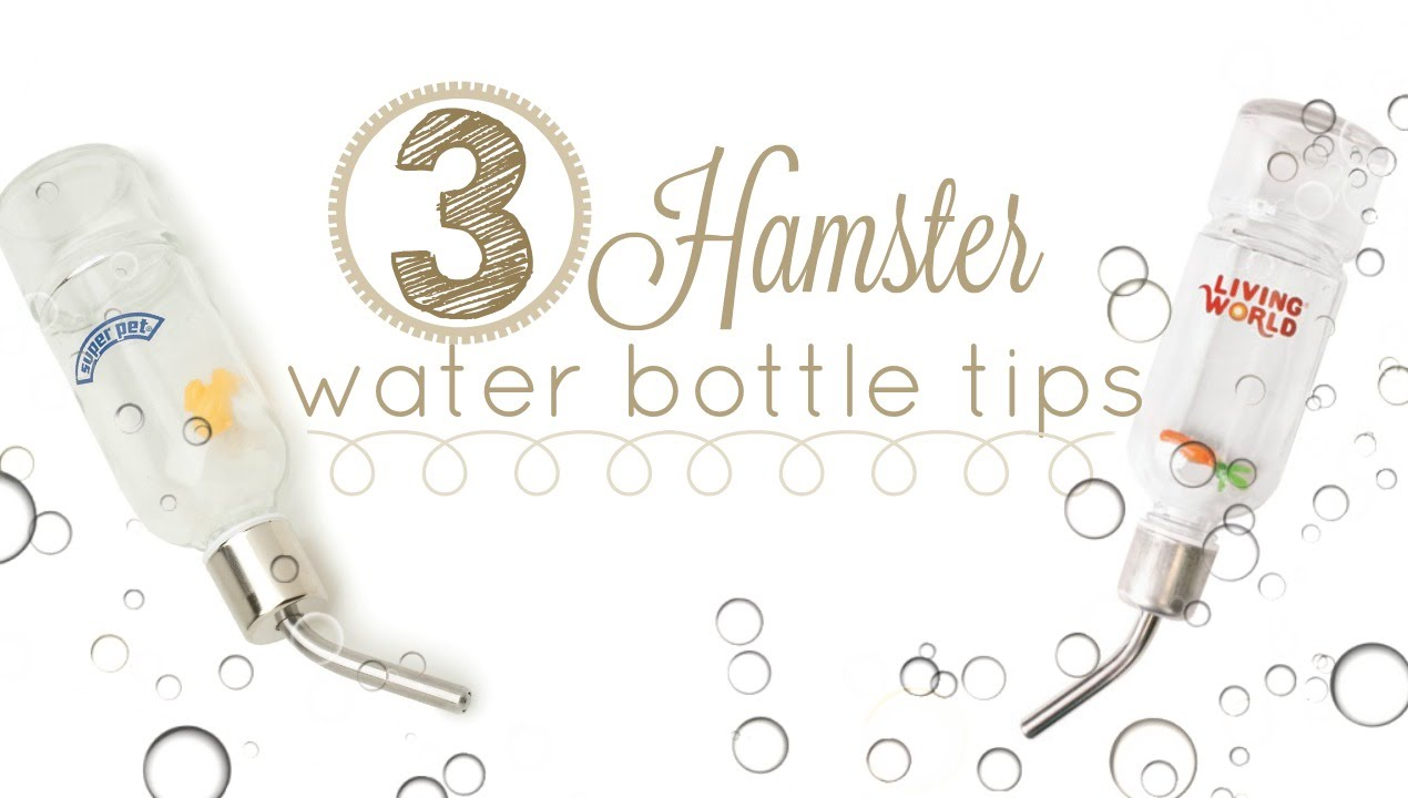 3 HAMSTER WATER BOTTLE TIPS!
