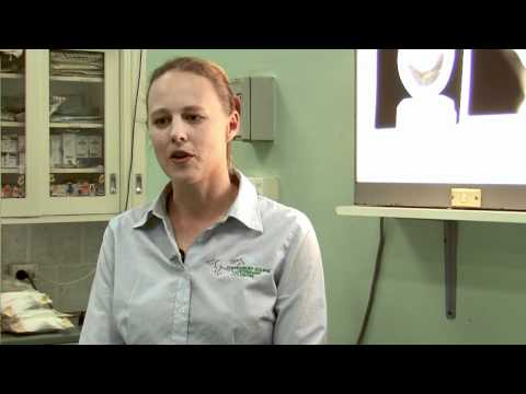 Veterinarian Emily-May Streckfuss talks about the Hidez Animal Compression Suits