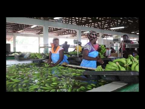 En hälsning från Kwame Banson - Fairtrade Africa