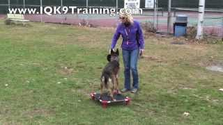 Iq K9 Training | Sits And Call Offs With A Fast Dog | Fun Dog Training | Carlsbad Dog Training