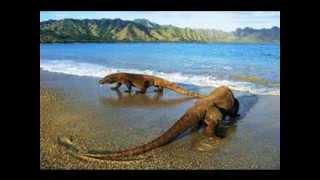 Objek Wisata Pulau Komodo (Komodo Island)