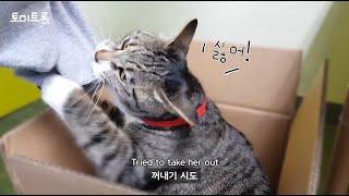 [장난감 나라의 트론이] EP.06 상자는 고양이도 춤…