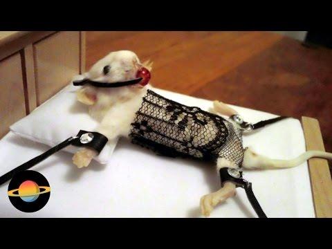 10 niepokojących przykładów wypchanych zwierząt