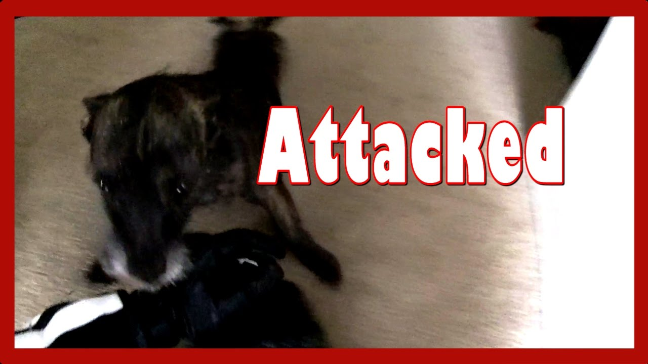 Dog Attack while Christmas Tree Hunting - YouTube