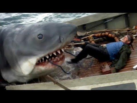 Мультфильм с участием акулы