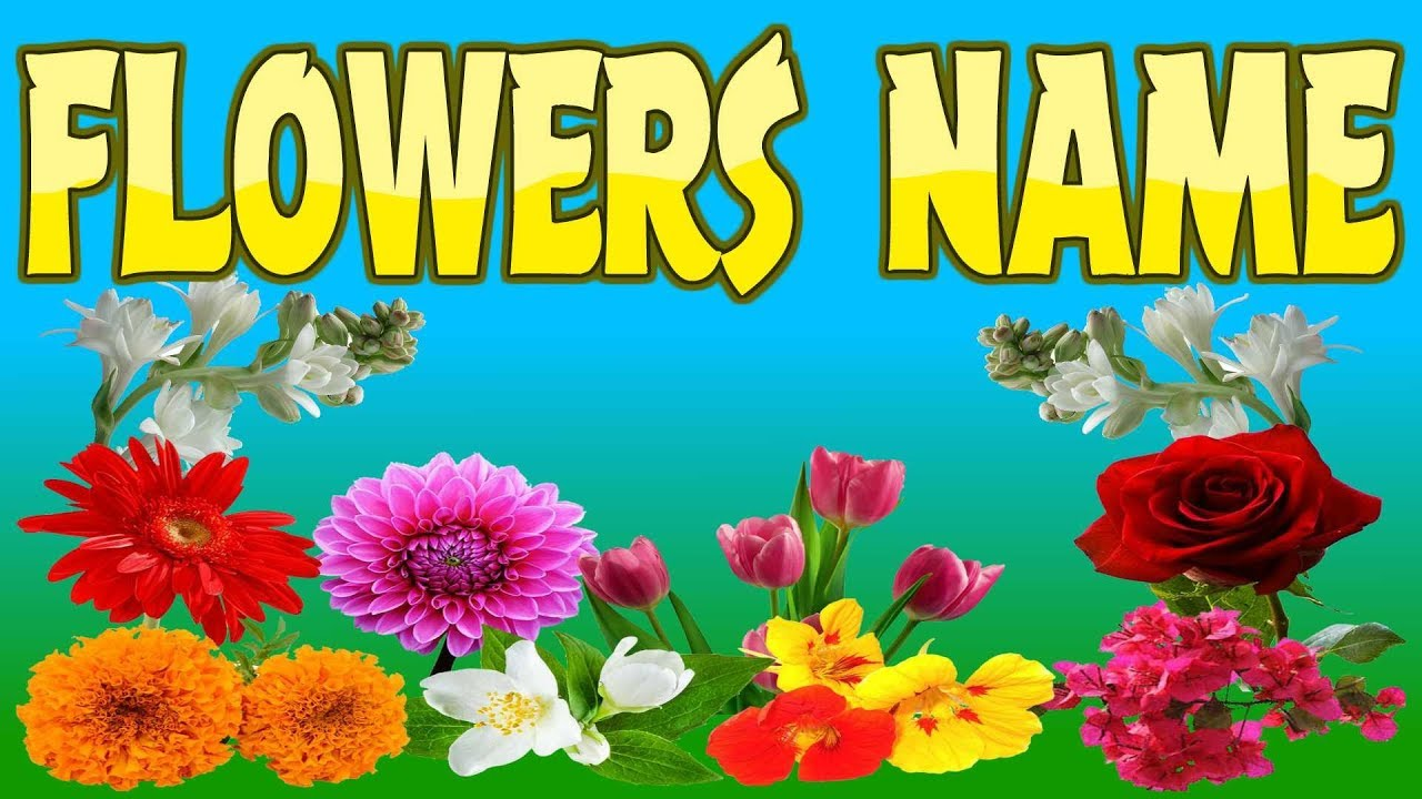 Flowers Name List Flowers Name Kid2teentv Youtube