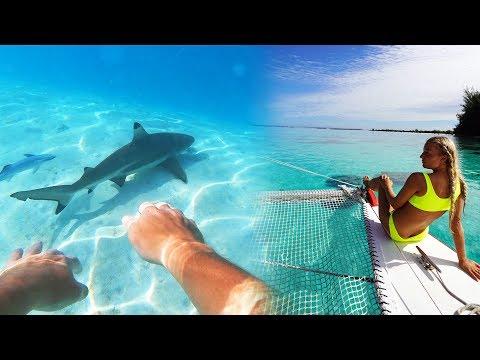 SWIMMING WITH SHARKS (Mo'orea Tahiti Vlog)