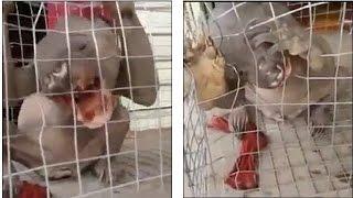 В Китае поймали живую Чупакабру(Жуткое существо с огромными когтями, странным телом и огромной головой с звериными зубами, поймали в Китайс..., 2015-04-21T13:45:48.000Z)