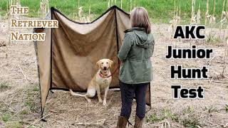 WHAT IS an AKC JUNIOR HUNT TEST? ~ Learn what to expect and prepare for. ~The Retriever Nation