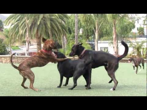 4 In Heat   Oceabside Dog Park 1  2012