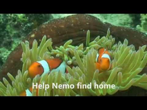 Degraded Great Barrier Reef no longer sounds like home