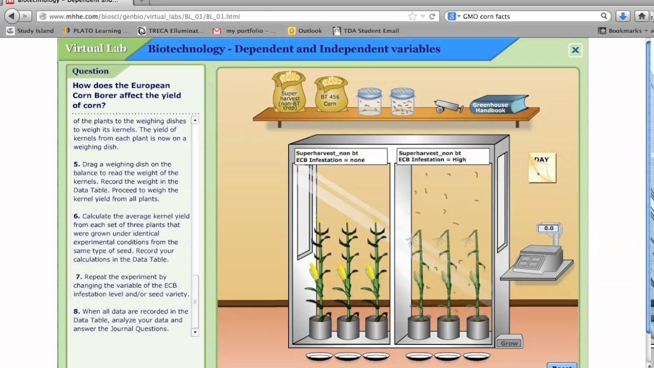 european corn borer virtual lab