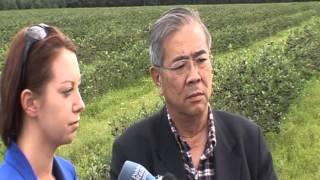 Nobofumi Miyake o wpływie aronii na zdrowie ludzi po awarii reaktorów atomowych w Fukushimie