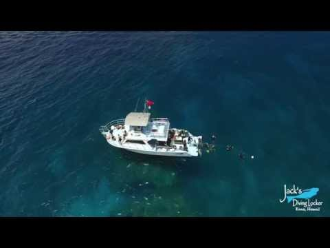 Dolphin Watch Snorkel Cruise