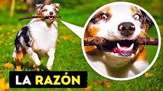 21 Comportamientos de los perros que ahora podemos entender