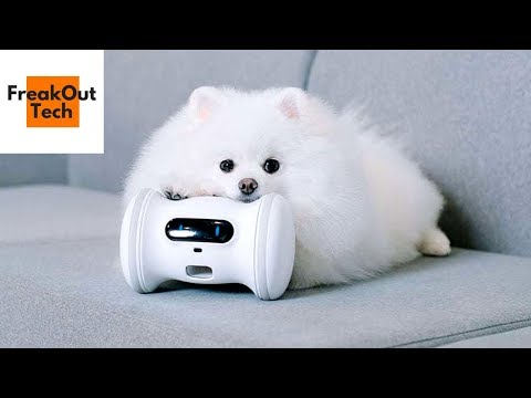 5 Awesome Dog Gadgets & Accessories You Will Love