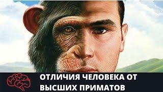 Отличия человека от высших приматов. Подготовка к ЕГЭ