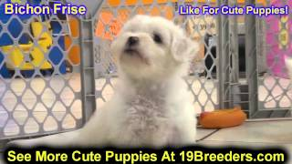 Bichon Frise, Puppies, For, Sale, In, Lansing, Michigan, Mi, Oakland, Macomb, Kent, Genesee, Washten