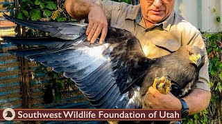 Release & First Flight of Rescued Baby Eagle!