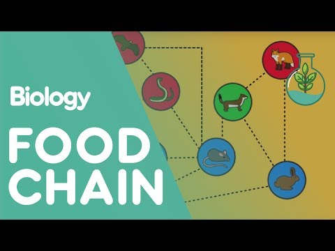 Food Chain | Ecology And Environment | Biology FuseSchool