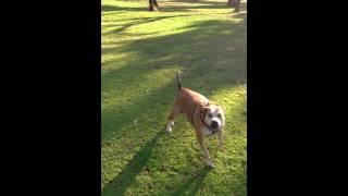 Aggressive Dog Barridale Park 5,1,15 Pt 1