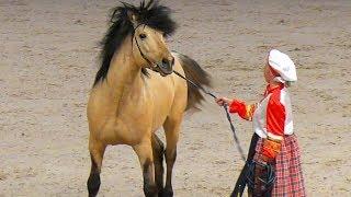 ВЯТСКАЯ порода лошадей: выносливость и добрый нрав #ИППОсфера 2019 конная выставка /Вятская лошадь