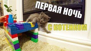 VLOG ПЕРВАЯ НОЧЬ с котенком ЧТО БЫЛО??? ЭХ эти Котята