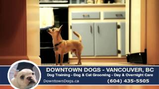 Vancouver, Bc Dog Daycare, Overnight Care At Downtown Dogs (604) 435-5505